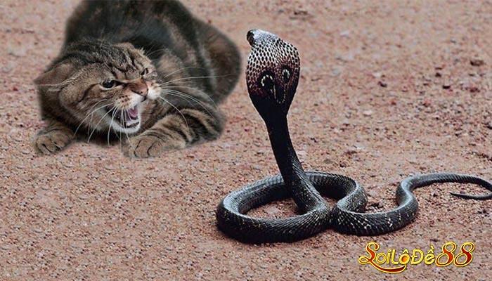 Chiêm bao mơ thấy rắn Hổ Mang