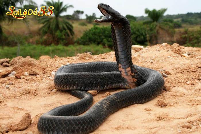 Ý nghĩa mơ thấy rắn là điềm lành hay dữ?