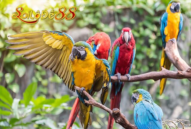 Chiêm bao thấy chim bồ câu