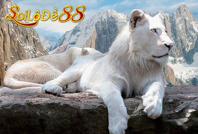 Nằm mơ thấy sư tử đánh số mấy