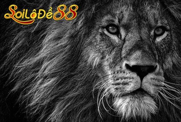 sư tử nằm yên